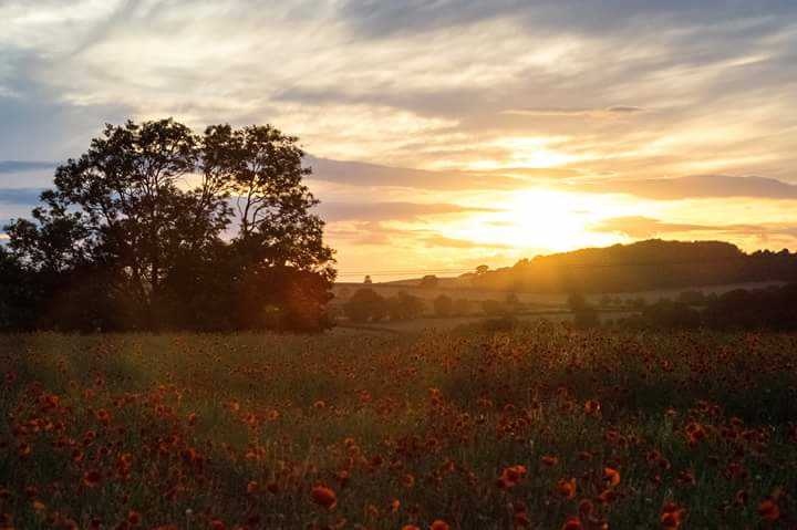 Poppy sunset Kingswinford 2017