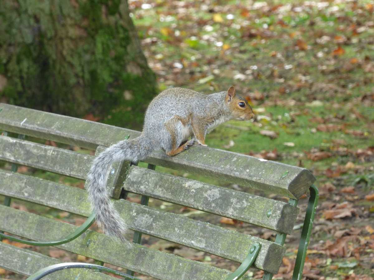 Handsworth Park bench squirrel