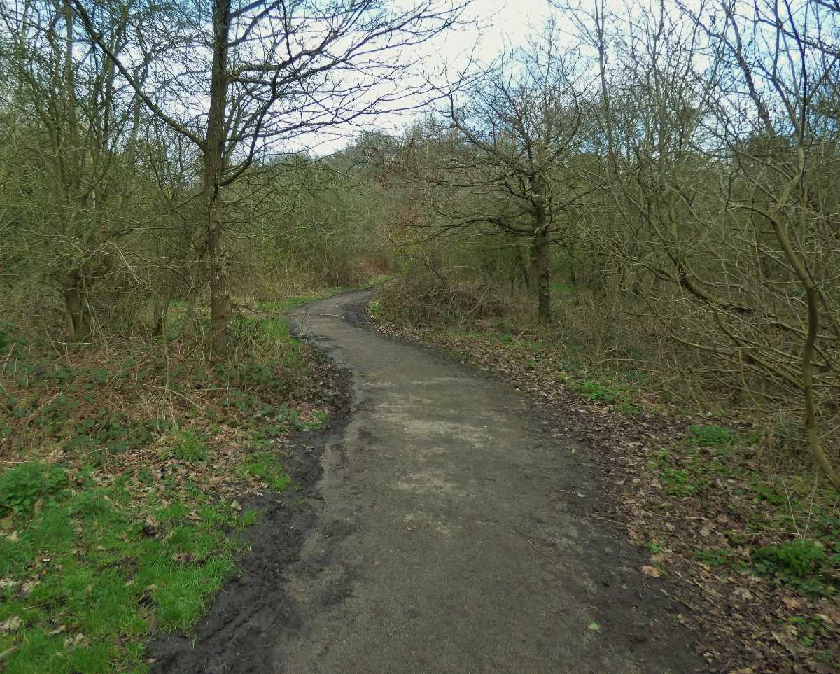 Holders Lane Woods