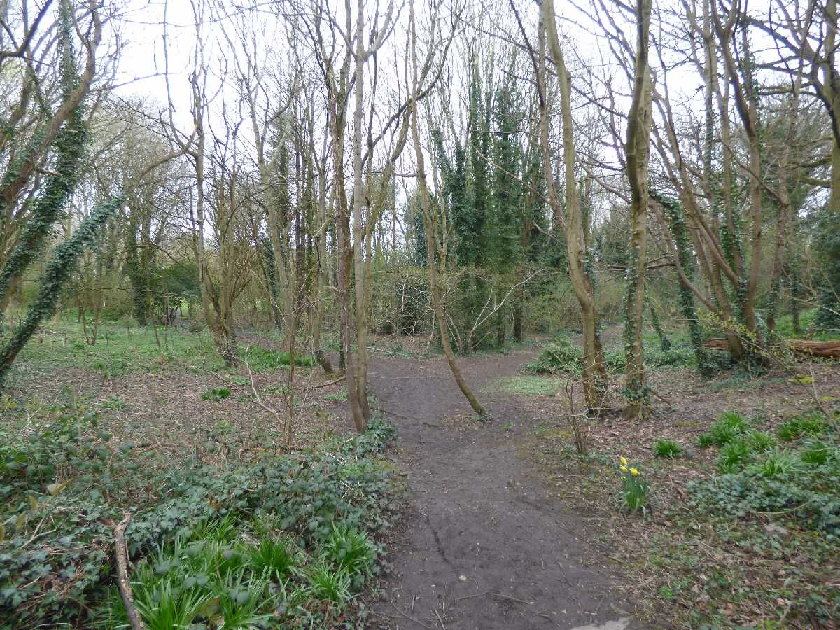 Joy's Wood at Moseley Bog