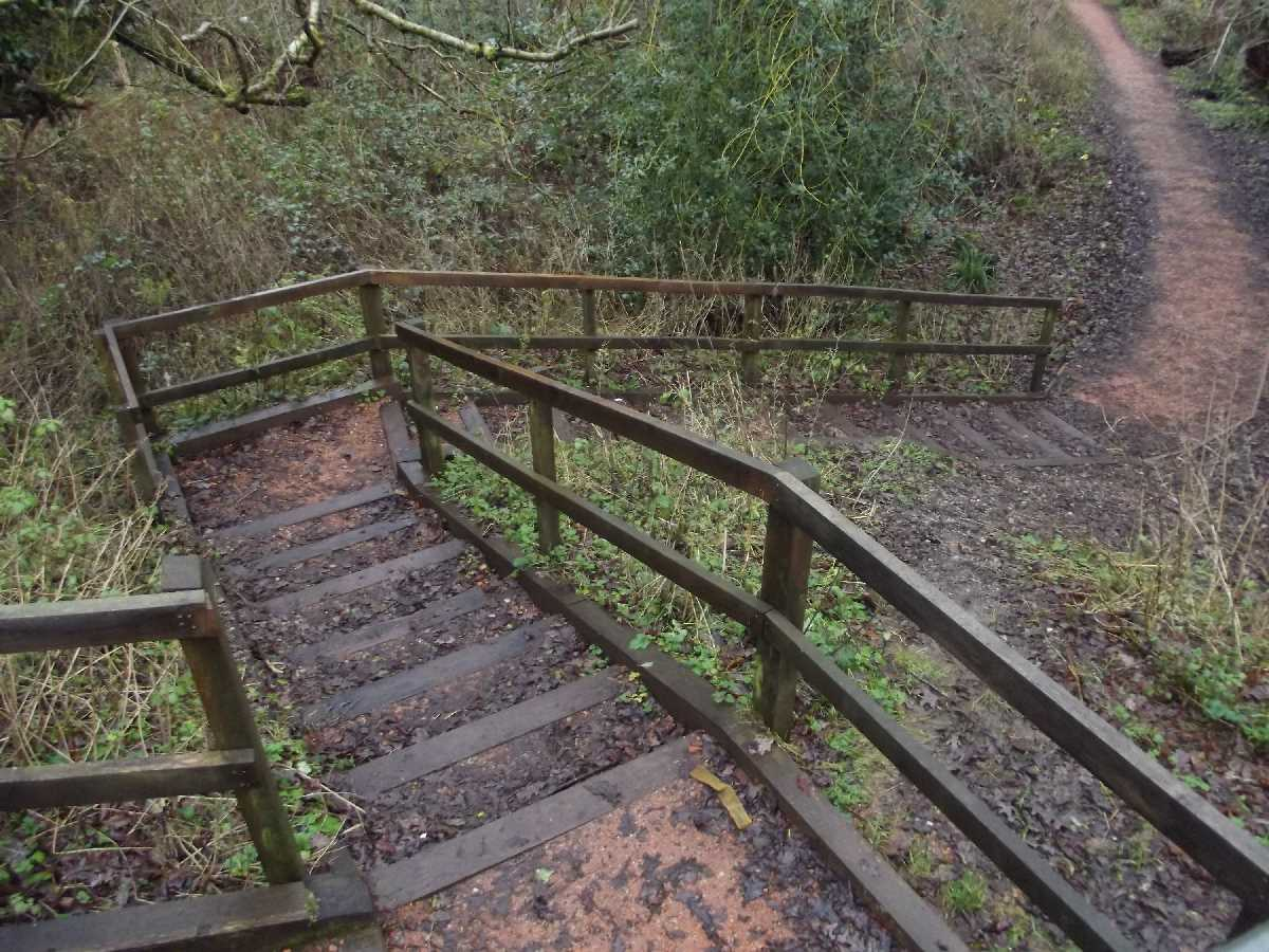 Moseley Bog steps down