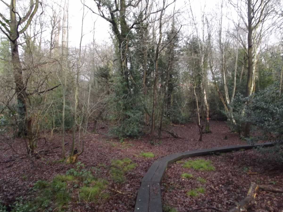 Moseley Bog decking