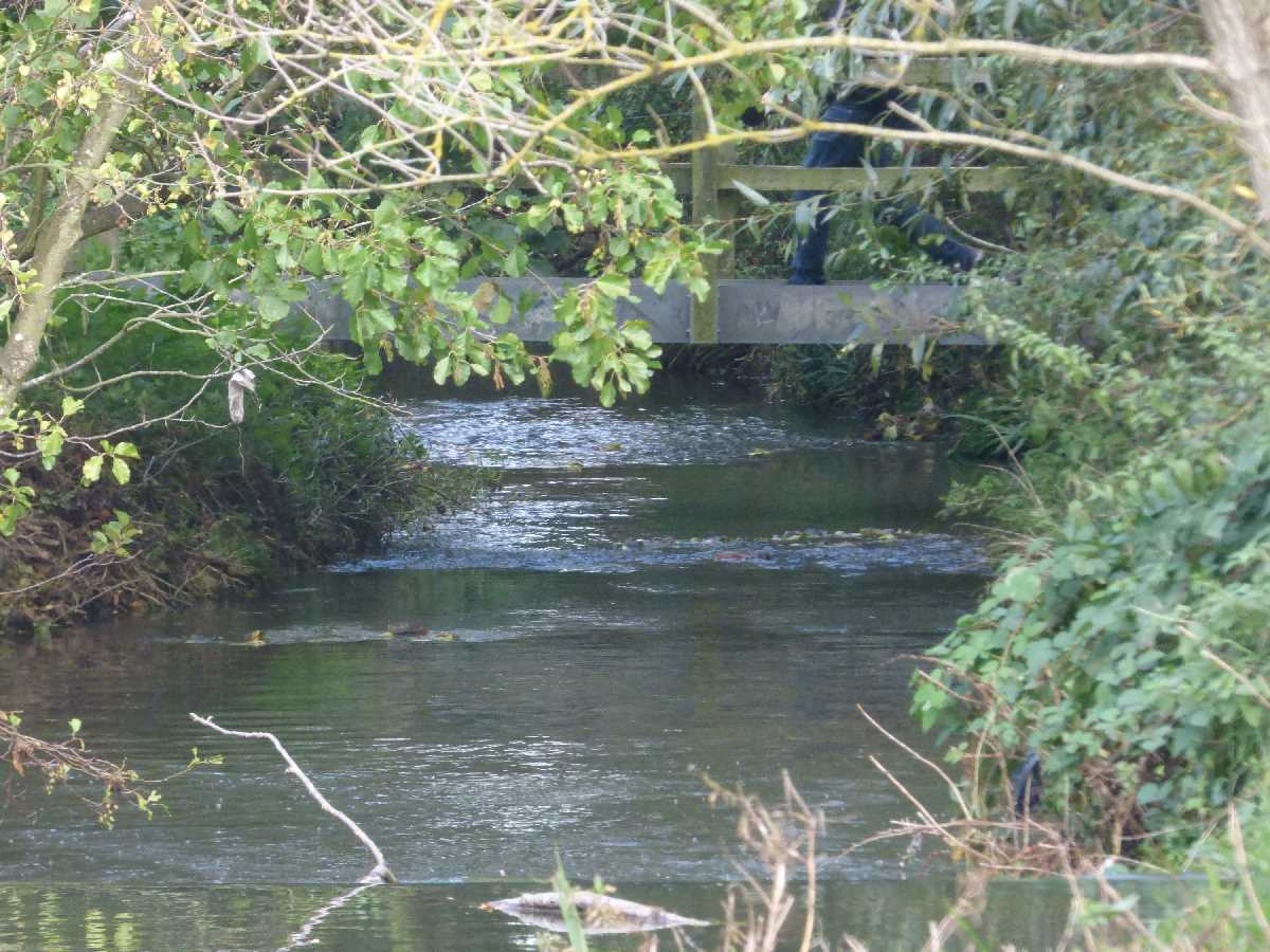 Hatchford Brook